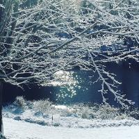 winter branch_thumb